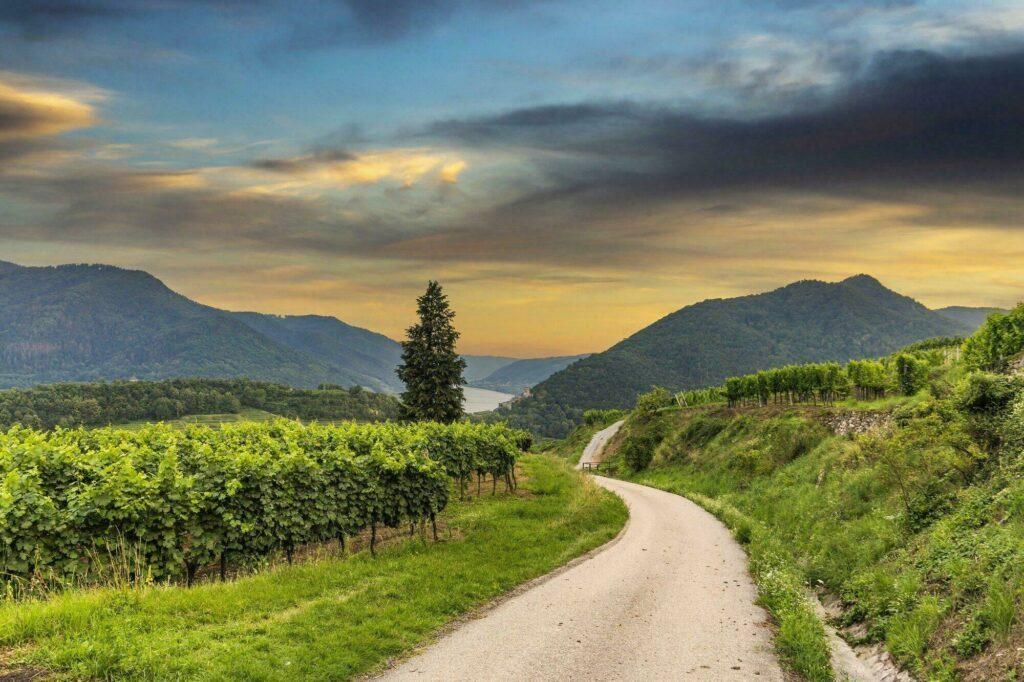 vignobles Autriche
