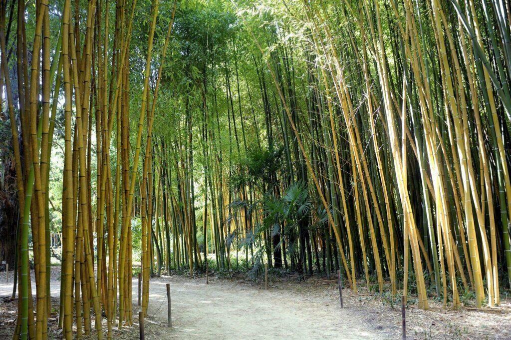 bambouseraie des Cévennes