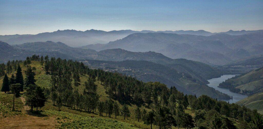 forêt Portugal
