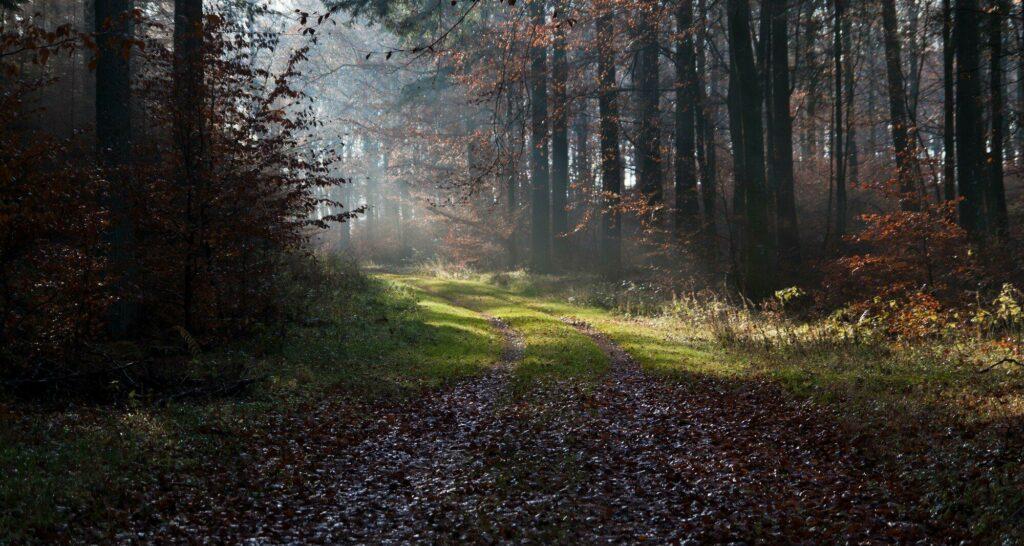 forêt Rold Danemark