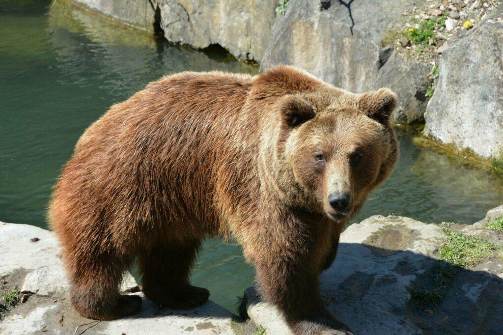zoo Innsbruck