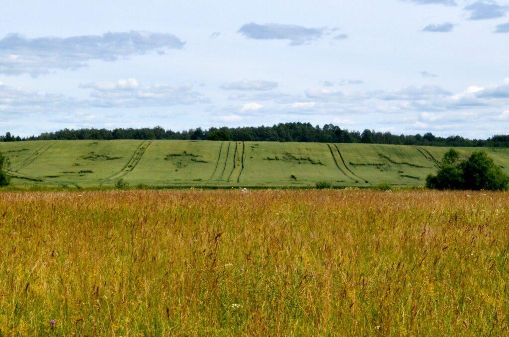 champs de céréales en Lettonie
