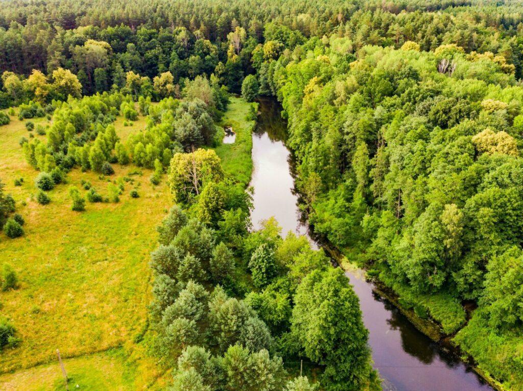forêt Tuchola Pologne