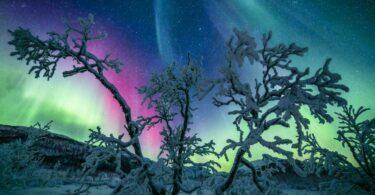 Laponie hiver aurore boréale - Fairy Tree