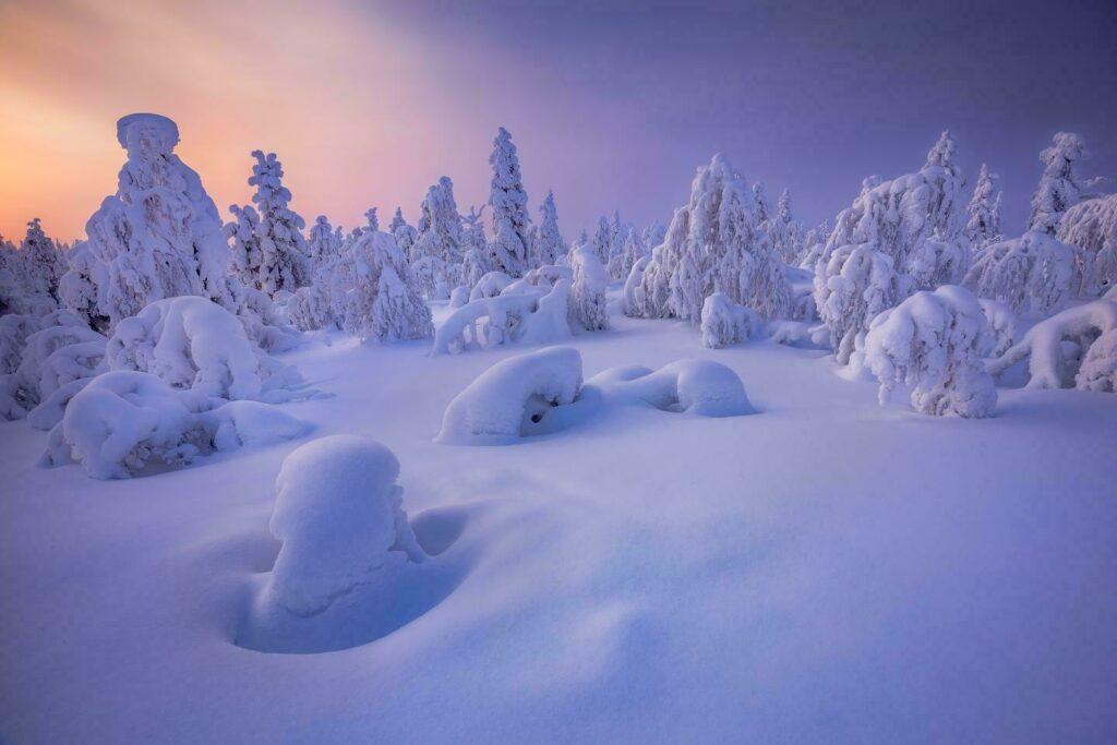 Laponie hiver finlande arbres couverts de neige et belles couleurs
