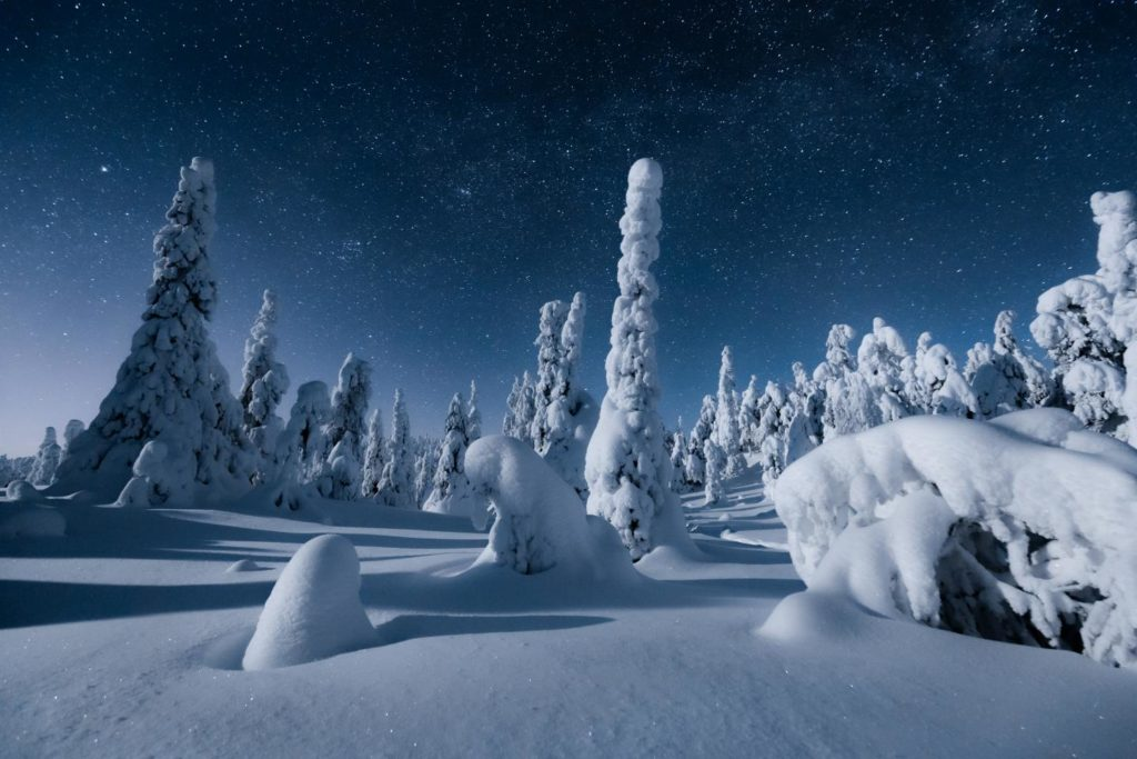 La forêt finlandaise sous la neige en Laponie
