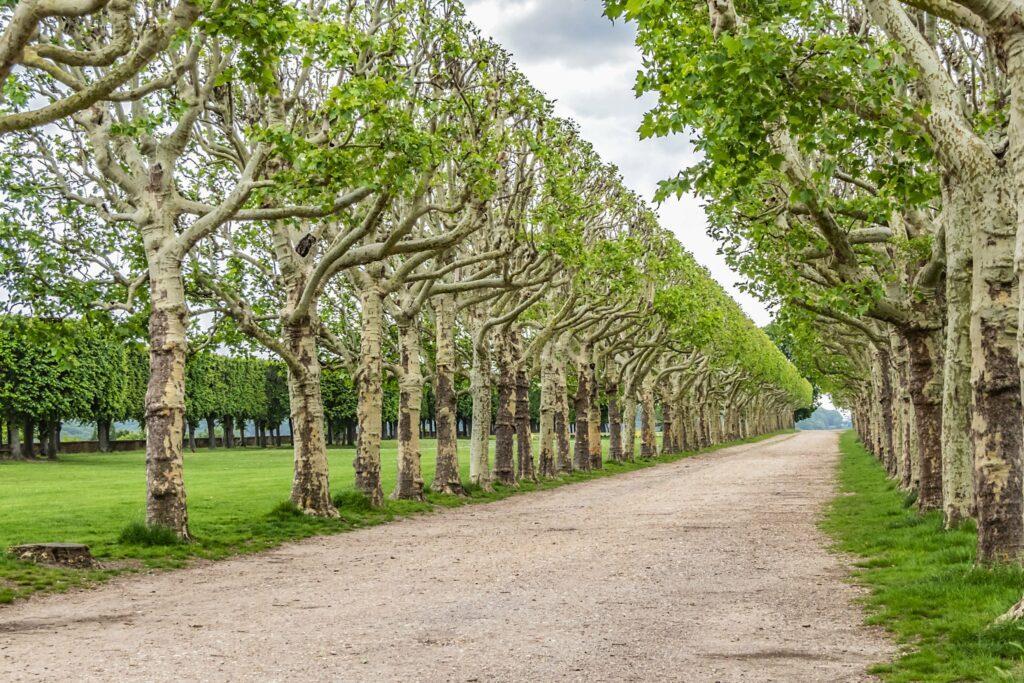 Se promener à Meudon
