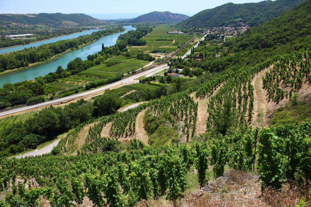 Vallée du Rhône oenologie