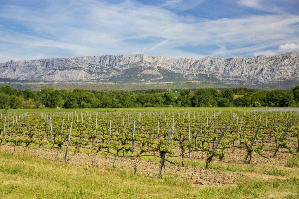 vignoble Aix-en-Provence oenologique