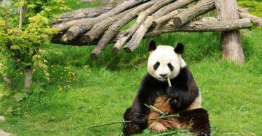 Zoo de France