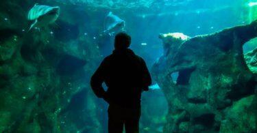 aquarium de France