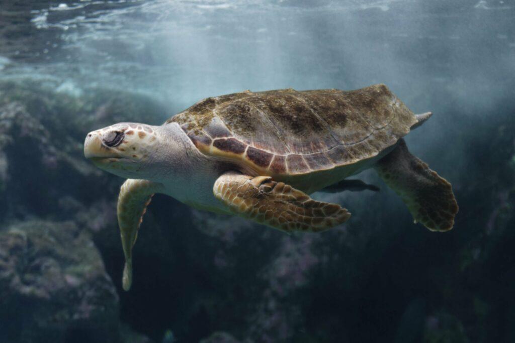 Océanopolis à Brest aquarium de France