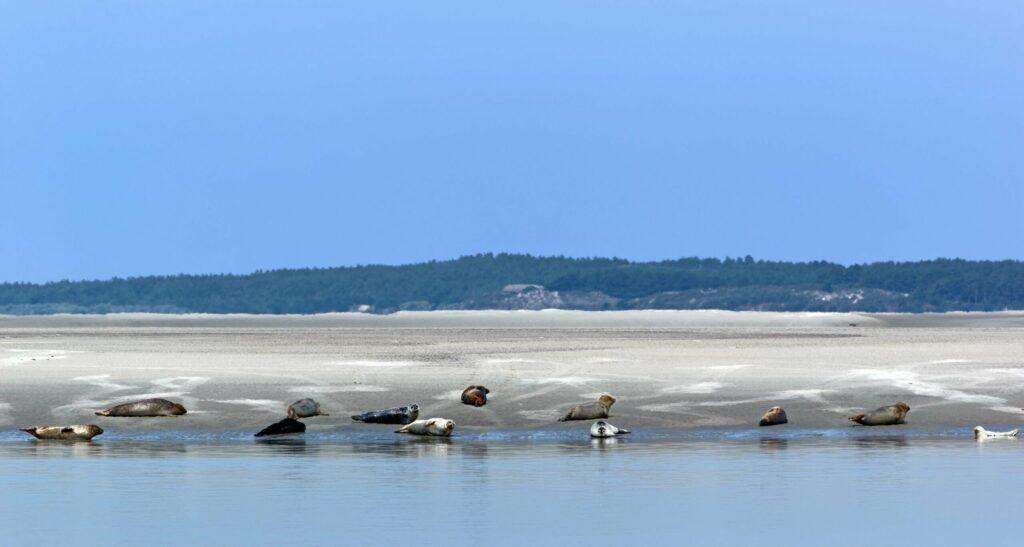baie de somme phoques