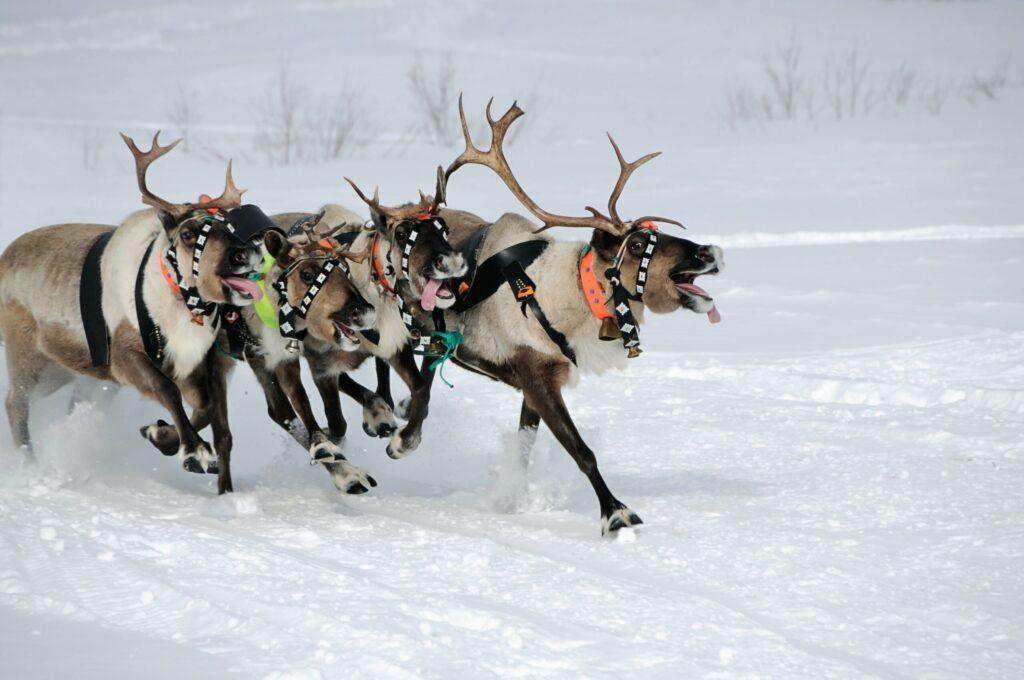 course de rennes en Finlande