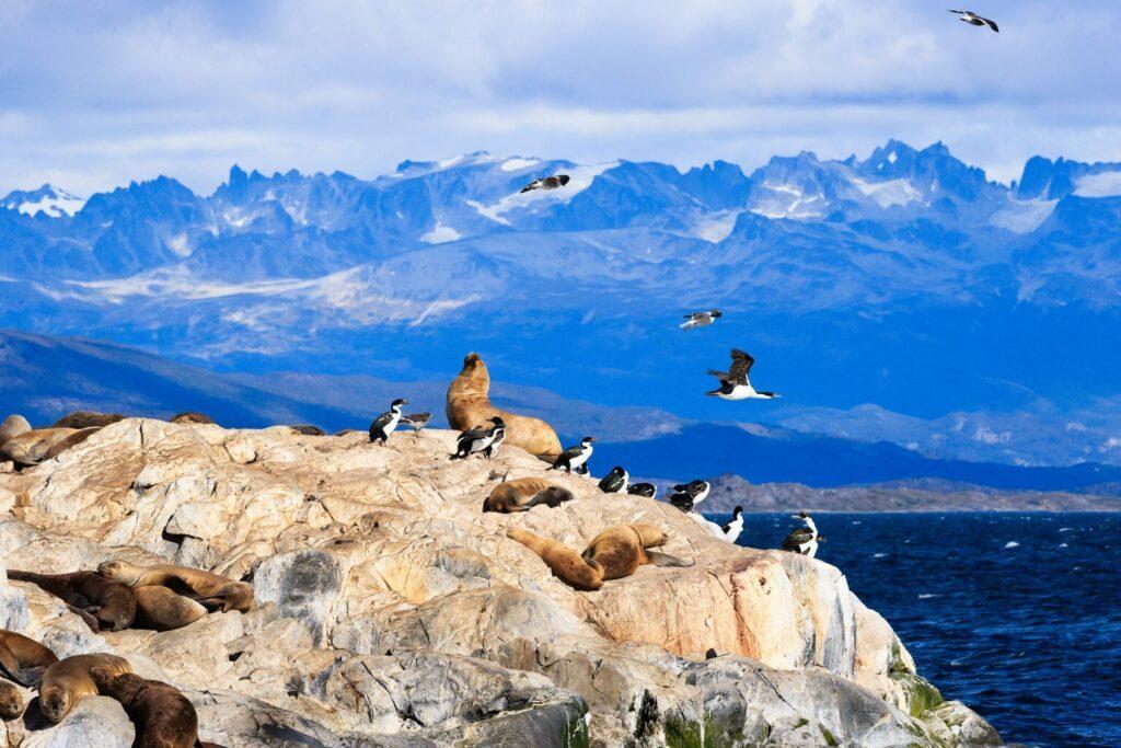 faune sauvage Ushuaia