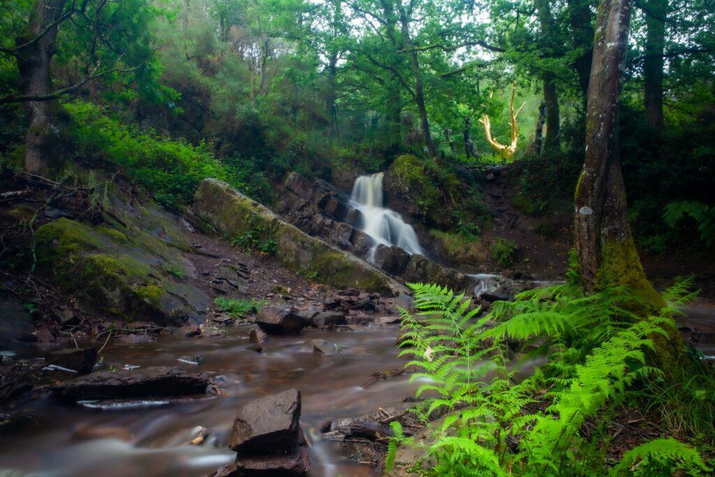 forêt de Brocéliande en Bretagne