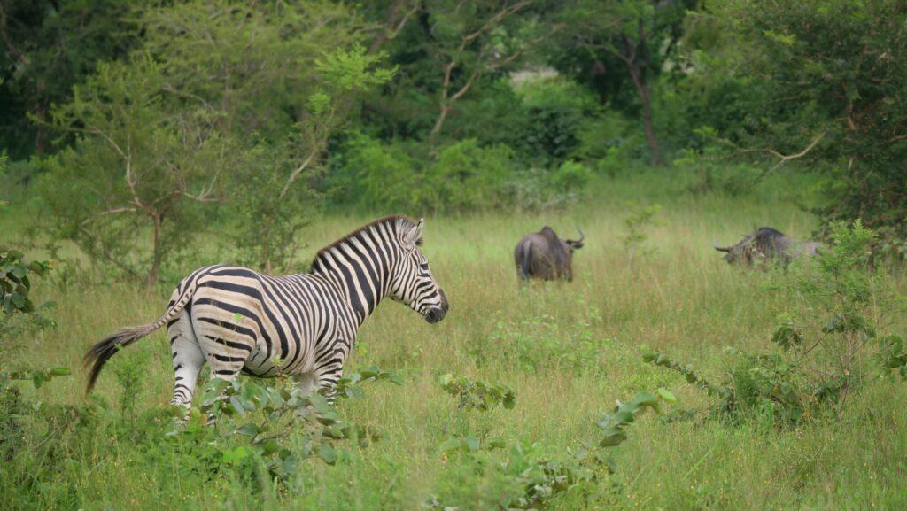 Parc national de la Kéran