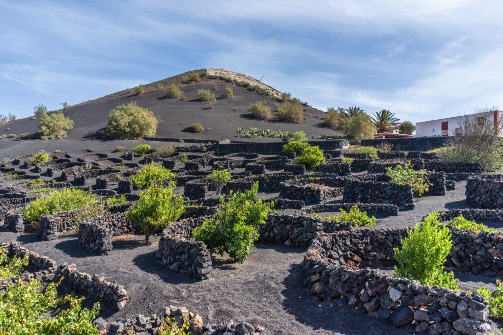 La Geria à Lanzarote