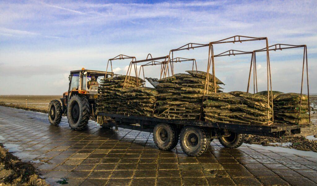 Ostréiculture en Vendée