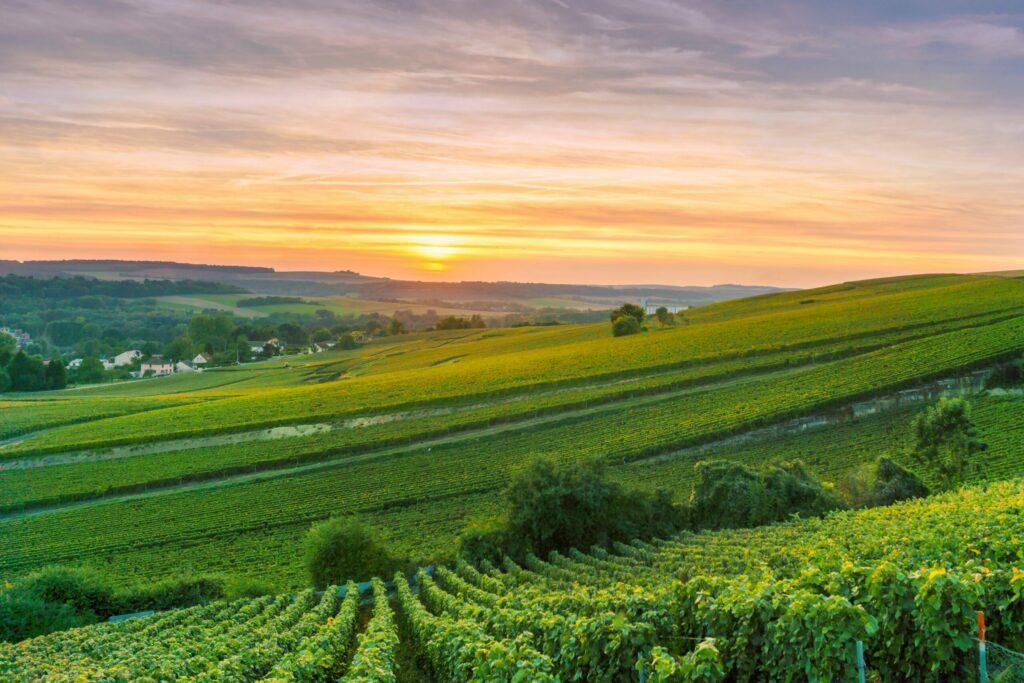 Survoler les vignobles de Reims