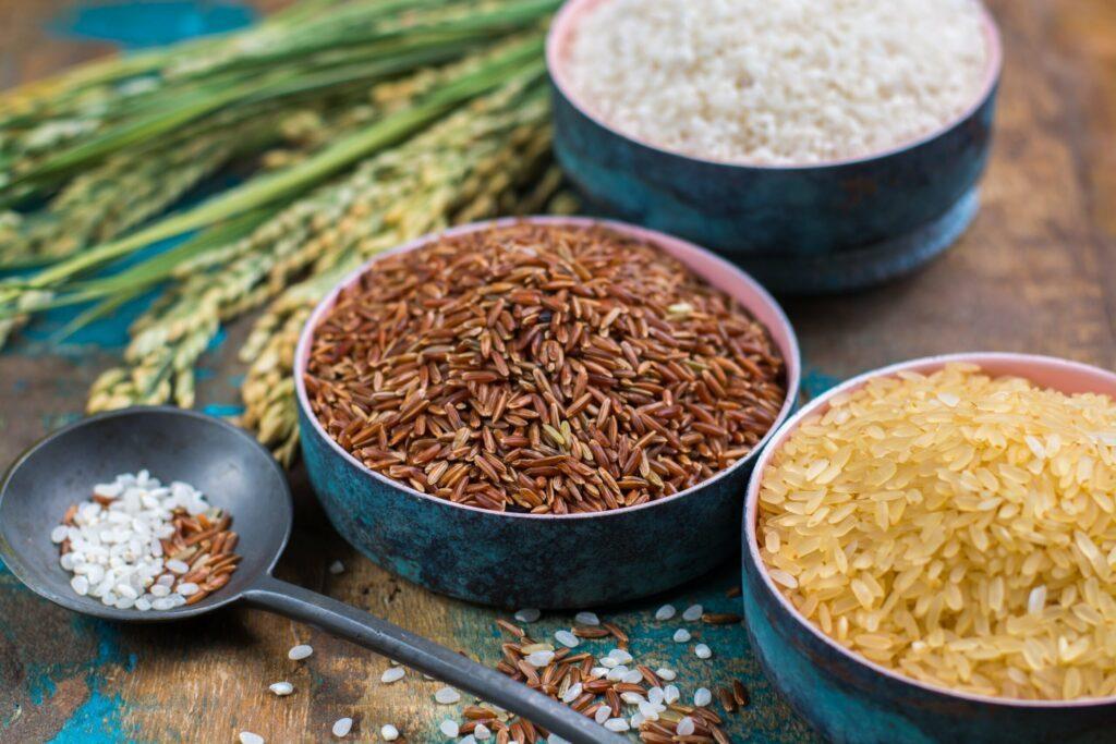 Différentes variétés de riz de Camargue