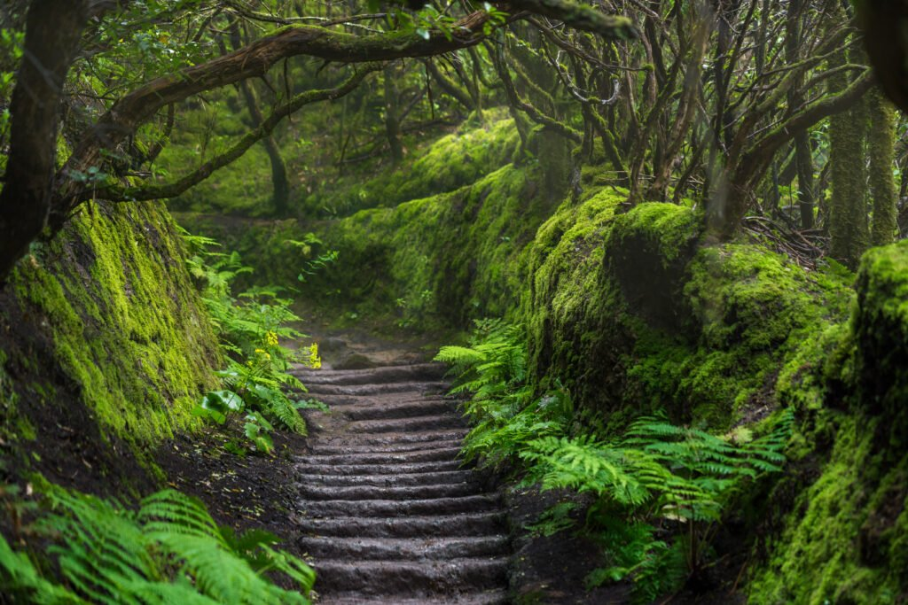 Faire une randonnée dans le parc Anaga sur Tenerife