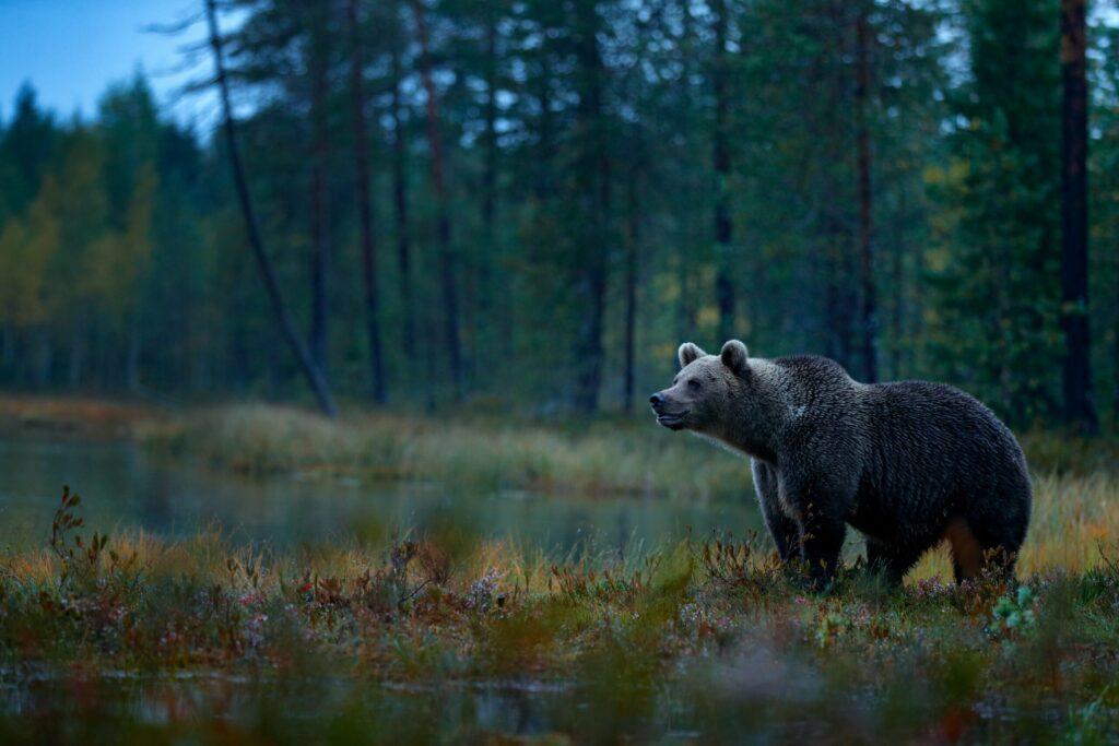Les forêts de Finlande