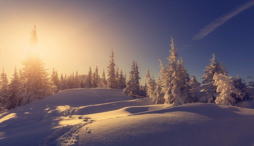 Les sapins figés dans la glace paysages de Finlande