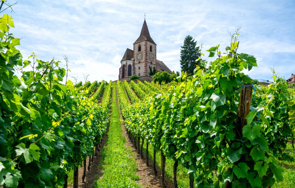 Les vignobles en Alsace