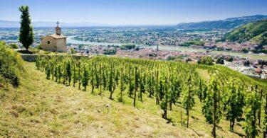 Vue sur Tain et Tournon depuis les vignobles de l'Hermitage