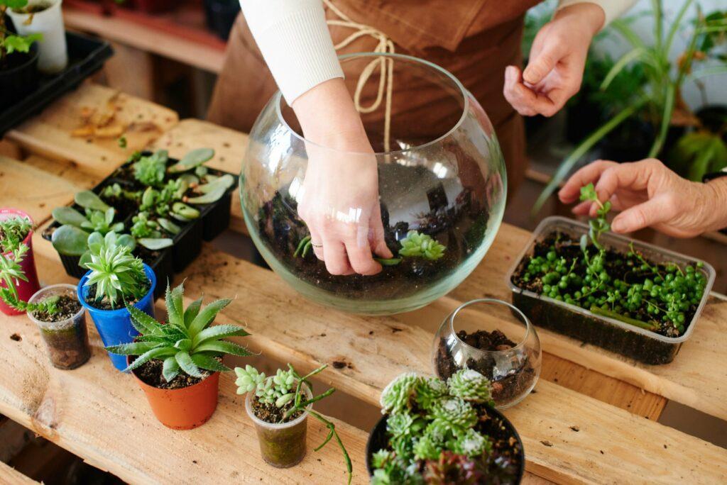 Apprendre à faire un terrarium