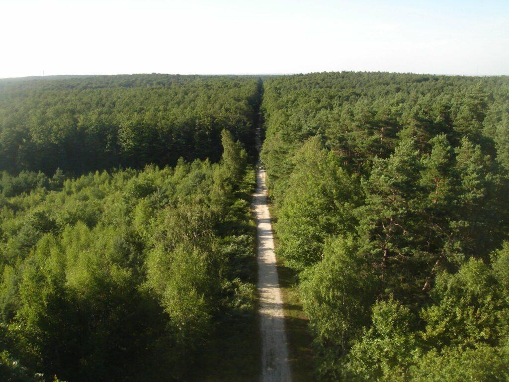 La forêt d'Orléans